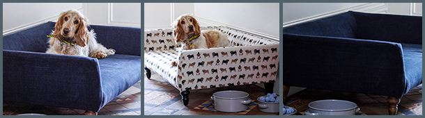 PetBeds_Cecil.jpg